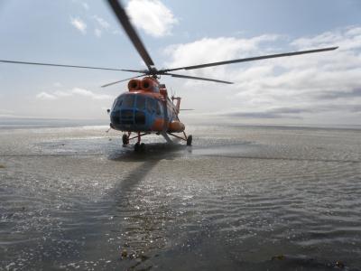Завершились плановые авиаучетные исследования на нерестилищах корфо-карагинской сельди