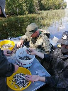 Осуществлен выпуск молоди сиговых видов рыб с крупнейшего рыбопитомника Ханты-Мансийского автономного округа