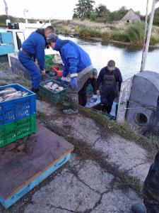 Мониторинговые исследования в заливах Калининградской области