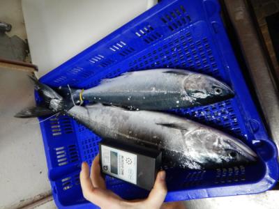 Измерение фоновых параметров американских лососей российским дозиметром-радиометром