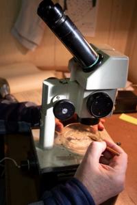 Оценка планктонного сообщества кормовой базы