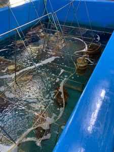 Центр аквакультуры на о-ве Попова